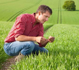 Cuánto gana un ingeniero agrónomo