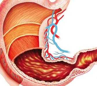 ¿Cuánto dura la digestión?